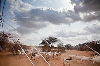 Somali Refugee Crisis in Kenya