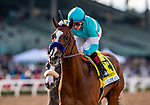 MAR 07: Authentic with Drayden Van Dyke wins the San Felipe Stakes at Santa Anita Park in Arcadia, California on March 7, 2020. Evers/Eclipse Sportswire/CSM