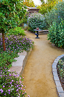 'Goldfines' decomposed granite crushed rock path in California backyard drought tolerant summer-dry garden with Arbutus 'Marina'