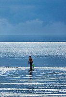 Boy explores the shallow waters with a bucket in hand, Skaket Beach, Cape Cod, Massachusetts, USA.