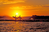 Two surfers walking along a North Shore beach during sunset with boards in hand