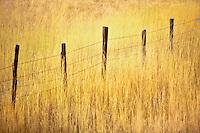Fence line in pasture. Near Halfway. Oregon