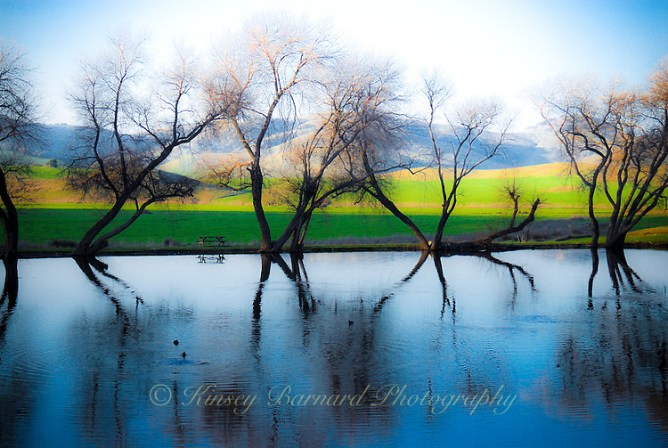 """""""MAGICAL POND""""<br /> <br /> Evening falls on the pond at Rouge et Noir Cheese Factory in Marin County California<br /> <br /> <br /> (1) 42 X 30 canvas print (SOLD)<br /> (1) 36 X 24 canvas print $3,200 <br /> <br /> 17 x 12.5 signed paper print<br /> 1/50 $95.00 ORIGINAL 24 X 36 GALLERY WRAPPED CANVAS SIGNED BY THE ARTIST $2,500. CONTACT FOR AVAILABILITY."""