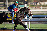 OCT 29 2014:Cigar Street, trained by Bill Mott, exercises in preparation for the Breeders' Cup Classic at Santa Anita Race Course in Arcadia, California on October 29, 2014. Kazushi Ishida/ESW/CSM