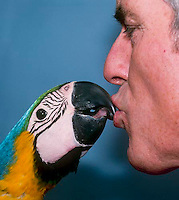 Man and pet parrot share a kiss as part of daily ritual