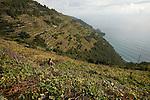 Parc national des Cinque Terre. Ligurie. Italie.
