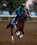 November 4, 2020:  Likeable, trained by trainer Todd A. Pletcher, exercises in preparation for the Breeders' Cup Juvenile at Keeneland Racetrack in Lexington, Kentucky on November 4, 2020. Alex Evers/Eclipse Sportswire/Breeders Cup
