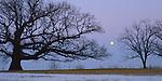 Putnam County, IL<br /> Illinois champion White Oak with winter moonrise