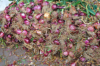 Red onions for sale in the Medina souk, Marrakesh, Morroco