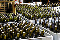 Bottles standing in plastic crates. Bodega Del Anelo Winery, also called Finca Roja, Anelo Region, Neuquen, Patagonia, Argentina, South America