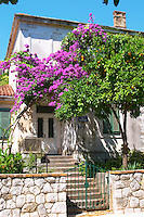 An old house painted white, iron gate painted green, trees with lilac violet flowers in bloom, orange tree with oranges. Uvala Sumartin bay between Babin Kuk and Lapad peninsulas. Dubrovnik, new city. Dalmatian Coast, Croatia, Europe.