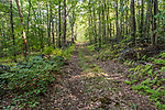 An old dirt road in rural Phillipston, Massachusetts