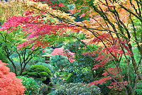 Sculpture and fall color at Portland Japanese Garden. Oregon
