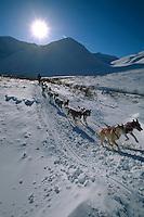 Rick Swenson In Rainy Pass Area Alaska.2004 Iditarod