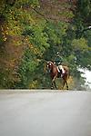 Dressage during day one  Fair Hill International in Fair Hill, MD  on 10/14/11.  (Ryan Lasek / Eclipse Sportwire)