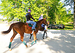 Animal Kingdom, winner of the 137th Kentucky Derby, takes his first jog at the Fair Hill Training Center on May 11, 2011 in Fair Hill, Maryland.