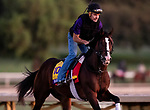 OCT 29: Breeders' Cup Classic entrant War of Will, trained by Mark E. Casse, gallops at Santa Anita Park in Arcadia, California on Oct 29, 2019. Evers/Eclipse Sportswire/Breeders' Cup