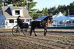 Horse and wagon in horse show at Cheshire Fair in Swanzey, New Hampshire USA