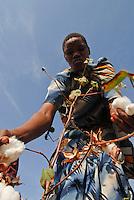 TANZANIA organic cotton project biore of swiss yarn trader Remei AG in Meatu district, woman harvest organic cotton / TANSANIA biore Biobaumwolle Projekt der Schweizer Remei AG in Meatu