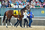 HOT SPRINGS, AR - MARCH 17: #4 Magnum Moon .Rebel Stakes at Oaklawn Park on March 17, 2018 in Hot Springs, Arkansas. (Photo by Ted McClenning/Eclipse Sportswire/Getty Images)