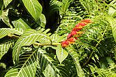 Wild Hawaiian Flora