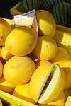 Williamsport Growers Market..Canary Melons