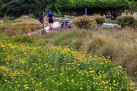 Visitors in flowering wildflower meadow Crescent Farm, sustainable demonstation garden; Los Angeles County Arboretum and Botanic Garden