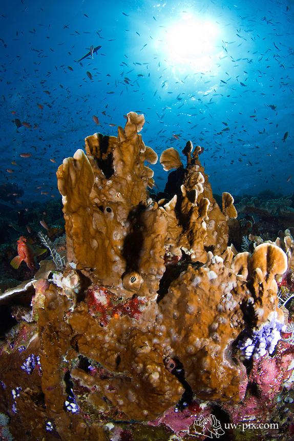 strange coral formation reefscene, Komodo national park, Indonesia, June 2011