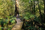 Image Ref: T69<br /> Location: Ada Tree Walk, Yarra Ranges<br /> Date: 16 July, 2016