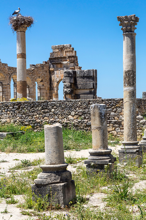 Volubilis, Morocco.  Columns of the Capitol in Foreground, Basilica in Background.
