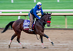 October 30, 2020: Venetian Harbor, trained by trainer Richard Baltas, exercises in preparation for the Breeders' Cup Filly & Mare Sprint at Keeneland Racetrack in Lexington, Kentucky on October 30, 2020. Scott Serio/Eclipse Sportswire/Breeders Cup/CSM
