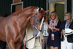 May 17, 2014. Back at the barn Saturday evening, California Chrome walks the shedrow after winning the 139th Preakness Stakes at Pimlico Race Course in Baltimore, MD. ©Joan Fairman Kanes/ESW/CSM