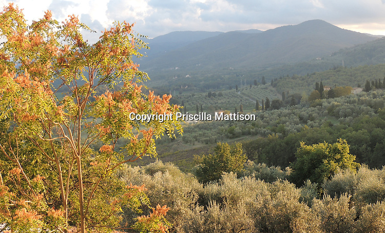 Val d'Arno, Italy - October 2, 2012:  Autumn light falls on the Tuscan countryside.