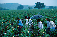 INDIA Kasrawad, Maikaal organic cotton project, field inspection by IMO / INDIEN Maikaal Biobaumwolle Projekt im Monsun, Inspektion durch IMO