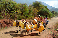 KENYA, Mount Kenya East , extreme drought due to lack of rain has caused massive water problems, villager transport water with donkeys over long distances  / KENIA, Duerre,  Wasser muss ueber weite Entfernungen geholt werden, Esel mit Kanistern