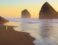 Gift card photo of a seagull is seen staring out towards the sunset with waves rolling onto sandy beach and rocks along the Oregon Coast