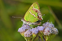 Insects: butterflies and moths