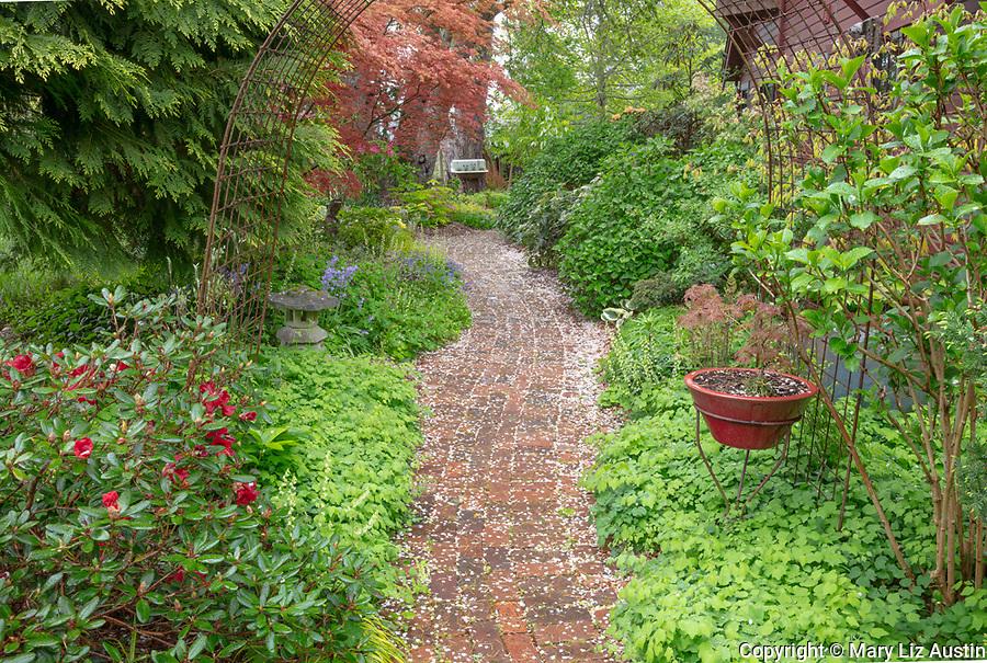 Vashon-Maury Island, Washington: Cherry blossoms cover a brick pathway bordered by a perennial shade garden