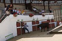 Europe/France/Aquitaine/40/Landes/ Vielle-Tursan: Aux arènes , les vachers de la Ganadéria Dal- Agruma débarquent les vaches  pour la course landaise //  France, Landes, Vielle Tursan, arena, cowherds from Ganaderia Dal Agruma Farm supervising the arrival of the cows before a bullfight