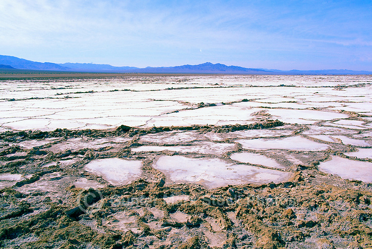 Bristol Dry Lake in the Mojave Desert, near Amboy, California, USA - Salt Bed after a Heavy Rainfall