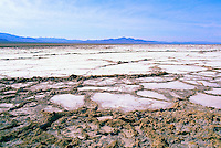 Bristol Dry Lake in the Mojave Desert, near Amboy, California, USA - Salt Bed after a Heavy Rainfall