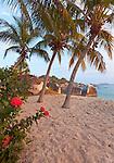 Virgin Gorda, British Virgin Islands, Caribbean <br /> Red flowering jungle geranium (Ixora coccinea) and palm trees lean towards the beach on Spring Bay at sunset, Spring Bay National Park