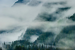 Early morning mist hanging over coastal coniferous forest. Near Khutze Inlet, Great Bear Rainforest, British Columbia, Canada.