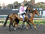 December 10, 2011.Charm The Maker approaching the starting gate before the Hollywood Starlet at Hollywood Park, Inglewood, CA