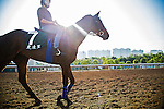 SHA TIN,HONG KONG-DECEMBER 09: Garlingari,trained by Corine Barande-Barbe,exercises in preparation for the Hong Kong Vase at Sha Tin Racecourse on December 9,2016 in Sha Tin,New Territories,Hong Kong (Photo by Kaz Ishida/Eclipse Sportswire/Getty Images)
