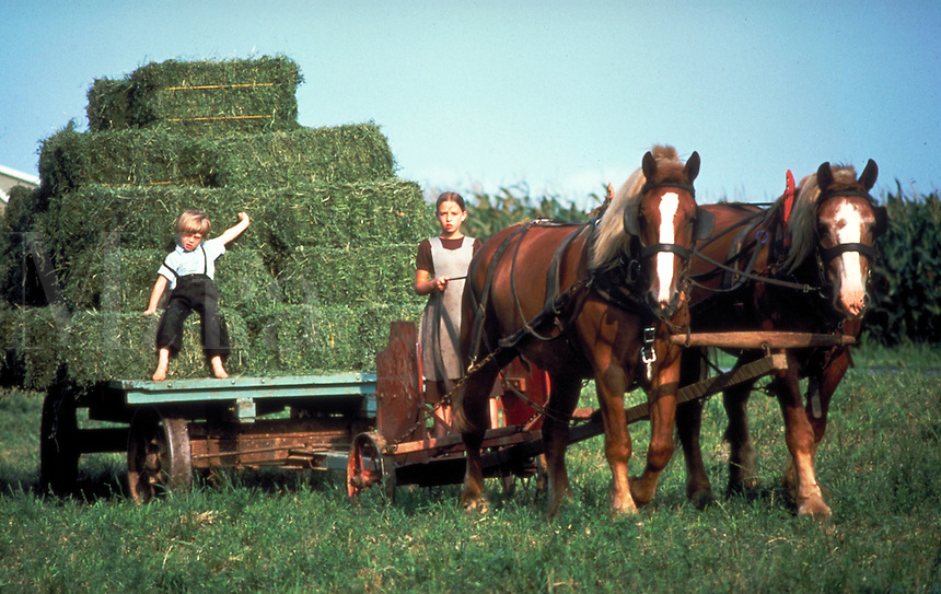 An Amish girl aged 12 and a boy aged 7 work in the fields, the girl driving a two-horse team as the boy rides on the haywagon. Amish children. Lancaster Pennsylvania United States farm.