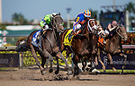 HALLANDALE BEACH, FL - JAN 28: Imperative #3, ridden by Antonio Gallardo defeats Stanford #4 with John Velazquez up wins the Poseidon Stakes at Gulfstream Park Race Course on January 28, 2017 in Hallandale Beach, Florida. (Photo by Alex Evers/Eclipse Sportswire/Getty Images)