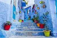 Chefchaouen, Morocco.  Flower Pots Line Steps Leading to a House  in the Medina.