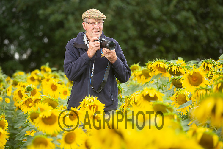South :Lincolnshire Farmer and photographer Nicholas Watts in his field of sunflowers at Vine House Farm, Deeping, St Nicholas, Lincolnshire <br /> ©Tim Scrivener Photographer 07850 303986<br />      ....Covering Agriculture In The UK....