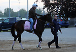 LOUISVILLE, KY - APRIL 25: Lewis Bay (Bernardini x Summer Raven, by Summer Squall) returns from the track led by her trainer Chad C. Brown after exercising in preparation for the Kentucky Oaks at Churchill Downs, Louisville KY. Owner Alpha Delta Stables. (Photo by Mary M. Meek/Eclipse Sportswire/Getty Images)